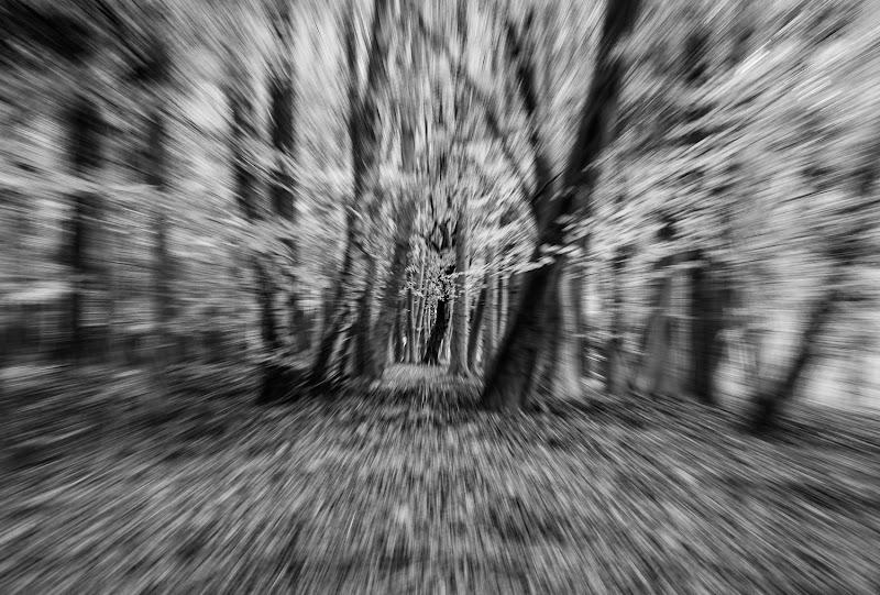 mi ritrovai per una selva oscura....... di Morellato Marco