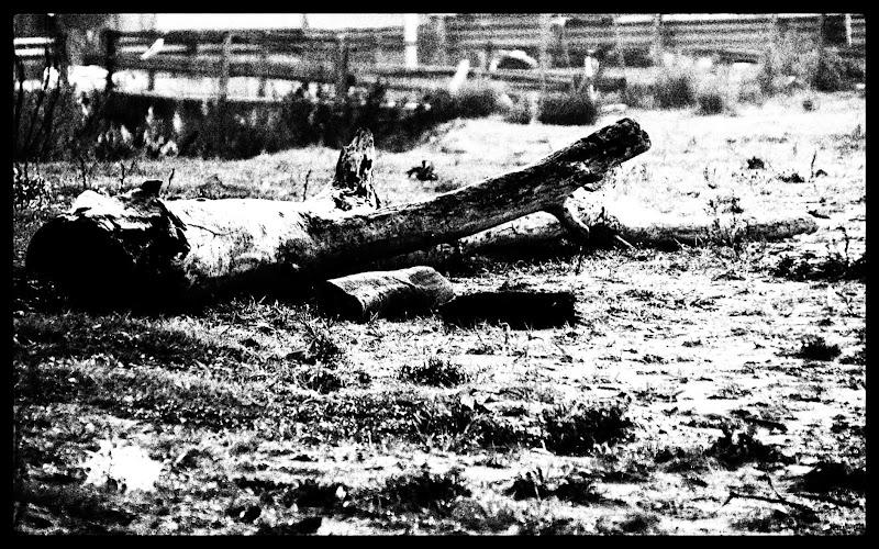 The tree  di pablo55