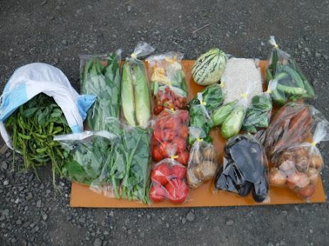 7/13(金)のお野菜