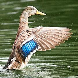 0 Bird 98391~Q by Raphael RaCcoon - Animals Birds