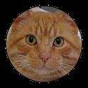 Sanyi a Macska icon