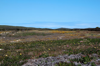 Photo: Abrahamskraal wather hole,  West Coast NP