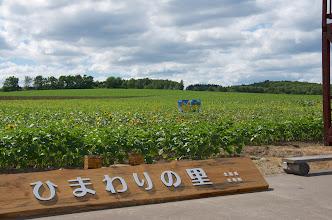 Photo: 北竜町の彩どり・7月の4