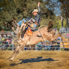 Watch The Birdie! by Paul Milliken - Sports & Fitness Rodeo/Bull Riding ( cowboy, australia, horse, rodeo, bucking )