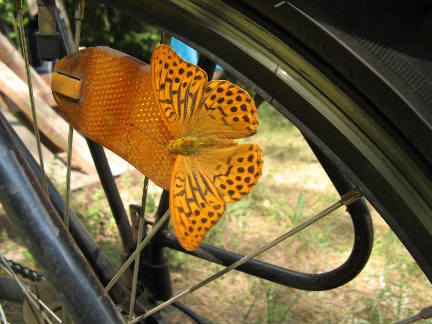 Zbłąkany motylek
