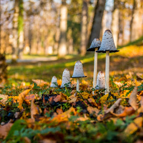 by Mario Horvat - Nature Up Close Mushrooms & Fungi ( mushrooms, outdoor, forest, leafs, nature, walking, autumn, leaf )