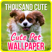 Cute Pets Wallpapers Background