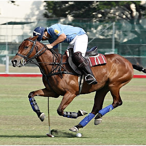 Costly Miss.. . by Steve Albano - Sports & Fitness Other Sports ( ayala alabang country club, polo sports, polo )