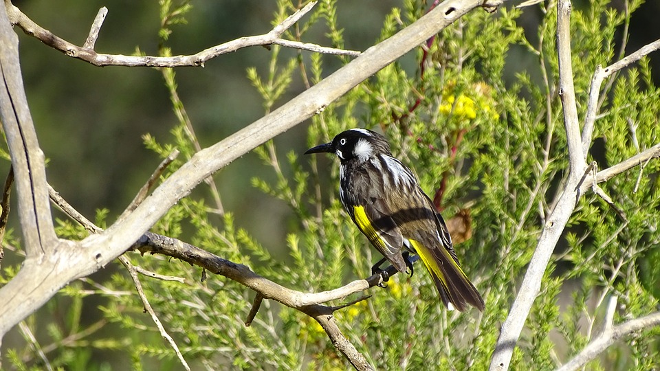 Image result for native birds of new zealand