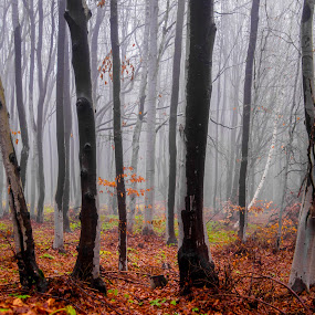 by Estislav Ploshtakov - Landscapes Forests