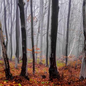 Autumn-4.jpg