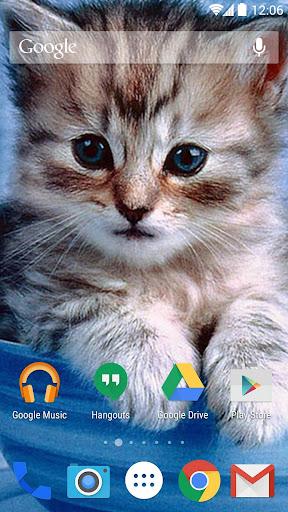 無料个人化Appの子猫の壁紙 記事Game