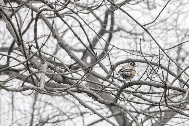 Colori spenti d'inverno di Giovanni Coste