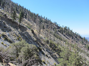 Photo: South Mount Hawkins Road slices along the west flank of Hawkins Ridge