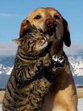 Photo: cat&dog
