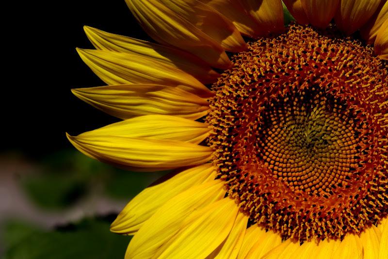 In qualsiasi momento cerca sempre il sole di irene_cerruti