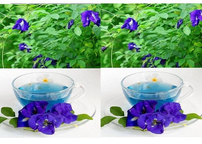 Công thức trà hoa đậu biếc giảm cân
