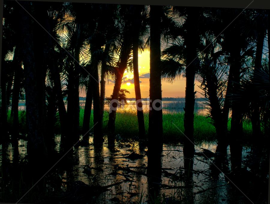 Florida Sunset by Joe Saladino - Landscapes Sunsets & Sunrises ( water, sunset, lake, sun, , golden hour, sunrise )