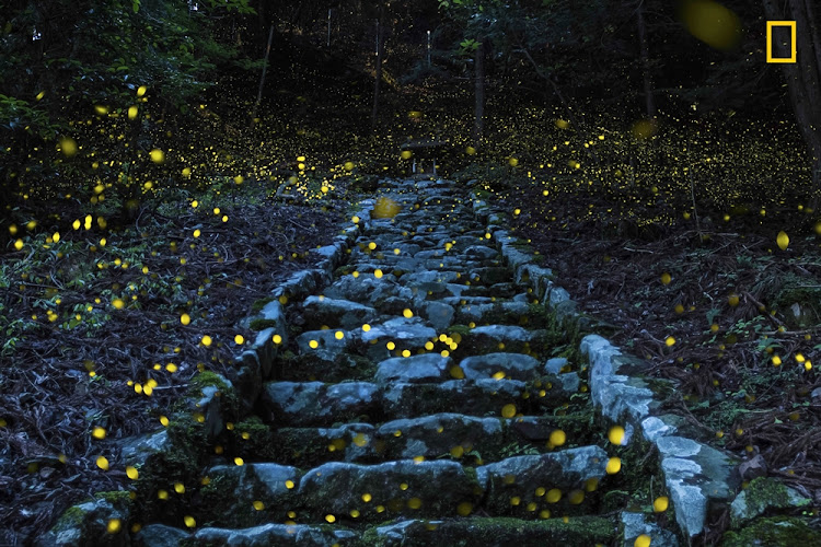 'Forest of the Fairy', a magical shot showing fireflies flitting about a Japanese forest, got an Honorable Mention in the Nature Category.