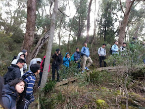 Photo: Day 11: Box Vale Walking Track - A 3-hour bush walking