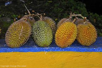 Photo: Durian fruit. Ternate Island, Indonesia.