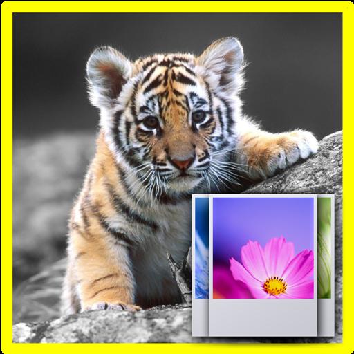 Little Tiger Wallpaper