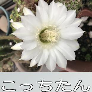 調理器具III・シルバforレシピ 無料!料理レシピまとめ レシぽん・道具編 - náhled