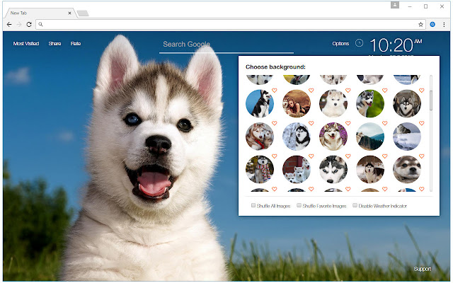 Husky Wallpaper Huskies New Tab Freeaddon Com