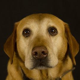 Nash by Stuart Walker - Animals - Dogs Portraits