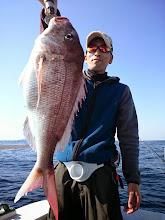 Photo: おおーっ!いいサイズだー、真鯛キャッチ!