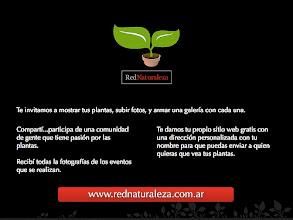 Photo: http://www.rednaturaleza.com.ar/novedades/1212-neomarica-candida