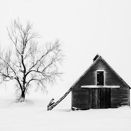 A Tree and a Barn  by Ken Smith - Black & White Landscapes ( barn, snow, landscape, nebraska )