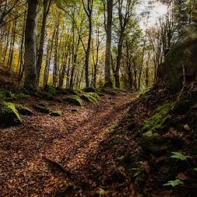 by Lorenzo Moggi - Nature Up Close Leaves & Grasses