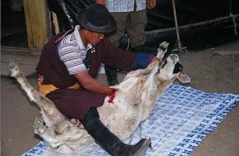 Photo: 03388 ブルド/ハスバター家/羊の解体