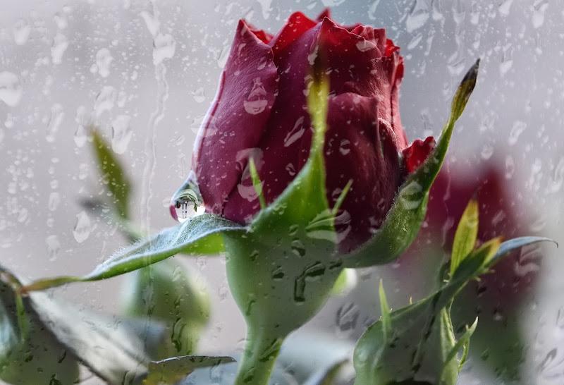 Raindrops di utente cancellato