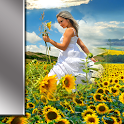 Sunflower Picture Frames icon