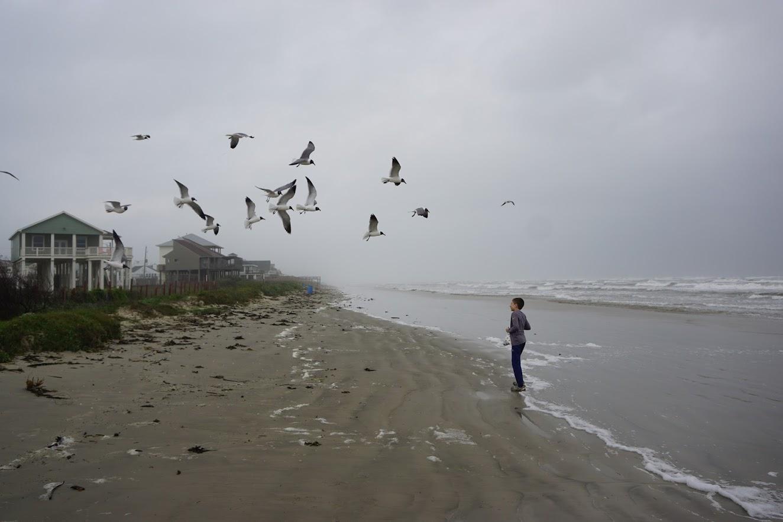 Seagulls Galveston Texas West End Beaches Gulf of Mexico