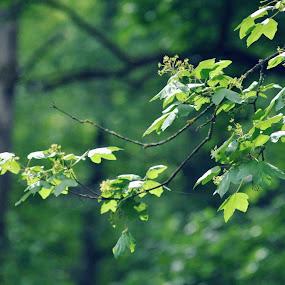 by Adela Rusu - Nature Up Close Trees & Bushes