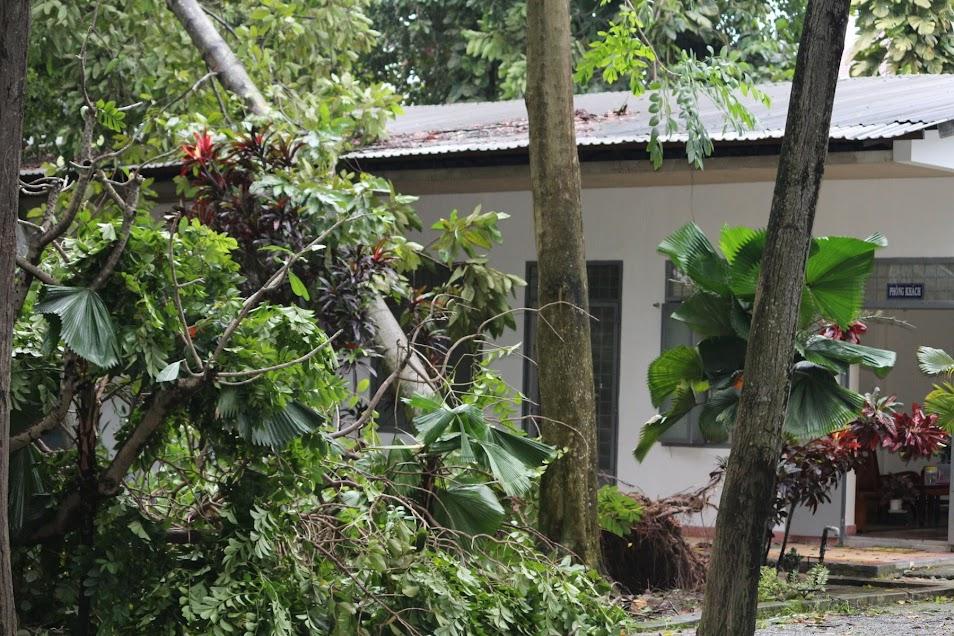 Phép lạ: Tượng Đức Mẹ Học viện Dòng Tên vẫn đứng vững trong cơn gió lốc