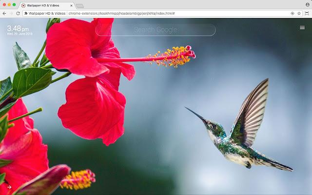Birds Full HD Wallpaper New Tab Theme