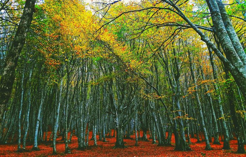 Wood di Eleonork