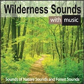 Wilderness Sounds With Music: Sounds of Nature Sounds and Forest Sounds