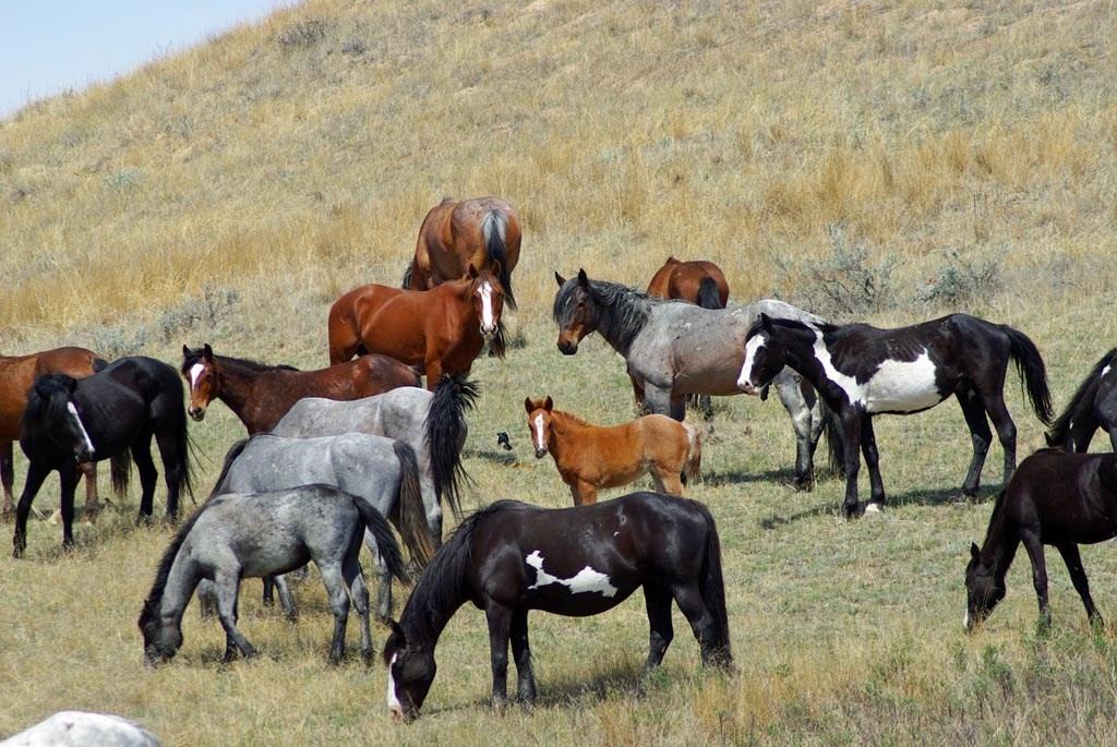 Horses get depressed