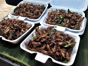 Photo: fried insects, MHS market
