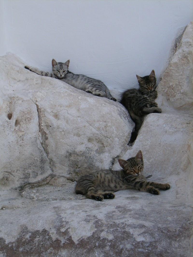 Miao Mio Mau di beatrice_verga