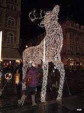 Photo: jelen v říji v Leuvenu