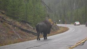 Best of Wildlife: Big & Small thumbnail