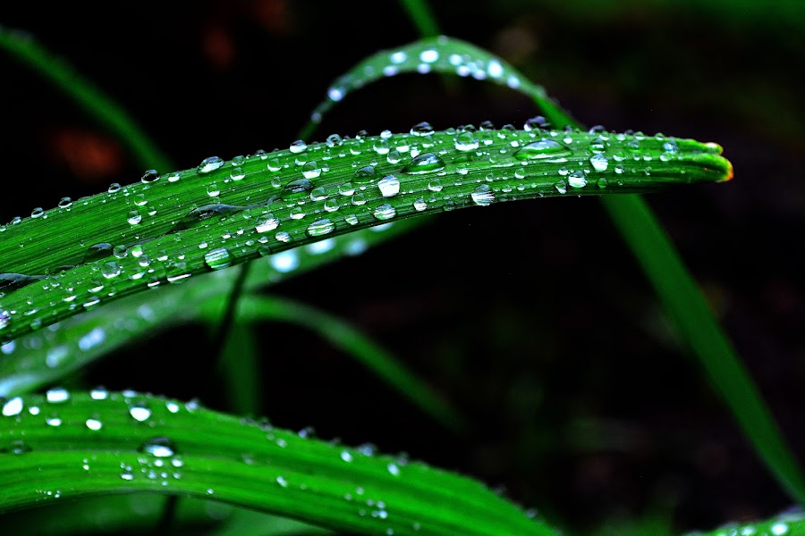 by Mayank Shrivastava - Nature Up Close Leaves & Grasses (  )