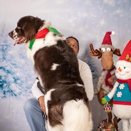 by Myra Brizendine Wilson - Animals - Dogs Portraits ( gcspca fundraiser, greater charlotte spca, holiday pet photo event, 2018-11-02 friday, maya morris, 2018-02-02 gcspca hoiday pet photo event, 2018 gcspca holiday pet photos event, gcspca, morris, maya,  )
