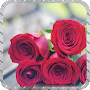 Red Roses Pack 2 Wallpaper APK icon